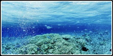 Save Oil - Najčistije vode sveta